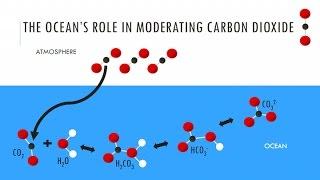 Everthing Matters | Calcium | Jessica Kendall-Bar | Exploratorium