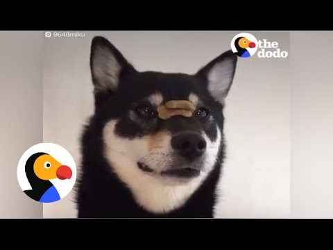 Dog is the Fastest Treat Catcher EVER | The Dodo