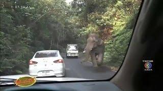 คลิปรถ6ล้อขับไล่ช้างป่าเขาใหญ่ ทำช้างตกใจวิ่งหารถอื่น เคราะห์ดีไม่ทำร้ายใคร