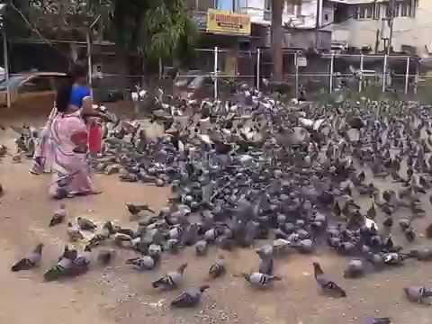 Pigeons World, Hyderabad