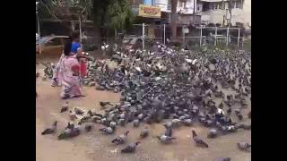 Pigeons World, Hyderabad