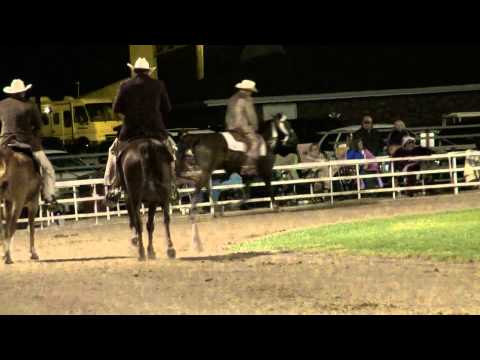 Ava 2012- Missouri Foxtrotter 5+ Years Open World Grand Championship