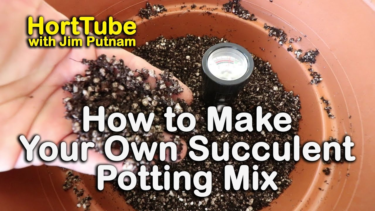 The Best Succulent And Cactus Potting Mix Testing Ph Soil