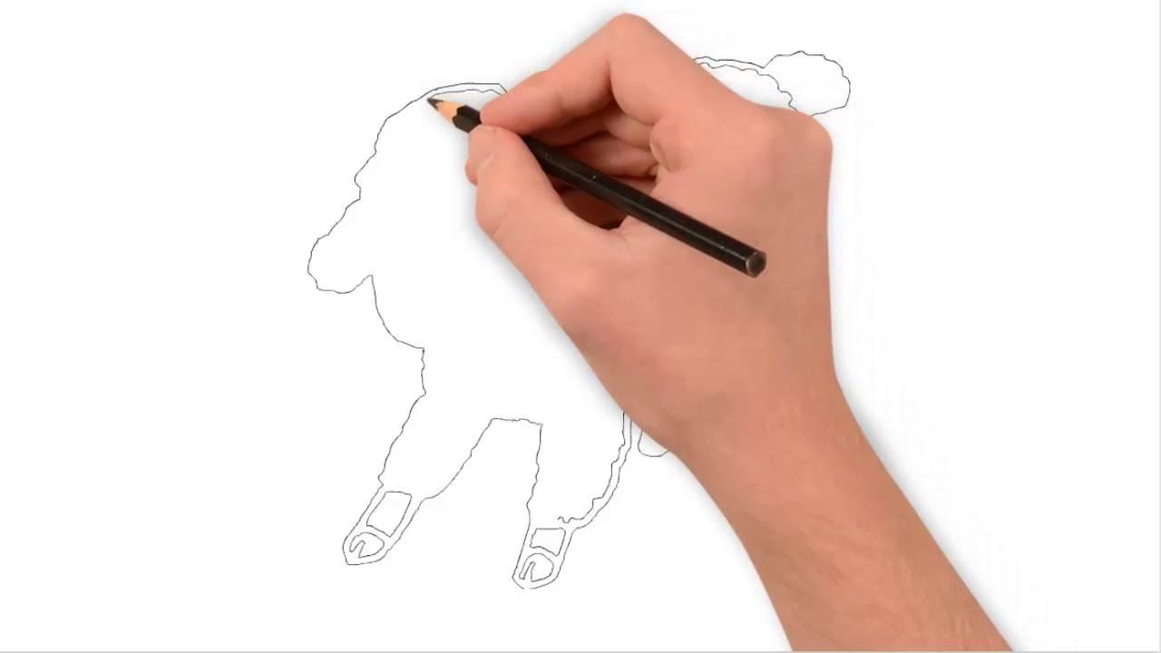 كيف ترسم خروف بسهولة How To Draw Lamb Easily Youtube