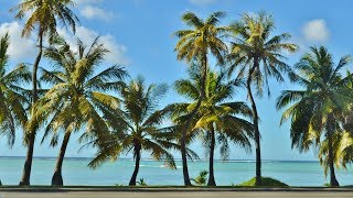 MBB - Palm Trees - Chill Lounge Cafe Featured Artist Track