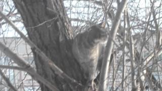 Неудачная охота кота на птичек)) \ Unsuccessful hunting cat on birds