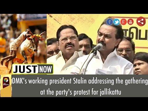 MK Stalin's Full Speech at DMK's Protest for Jallikattu Support | Live