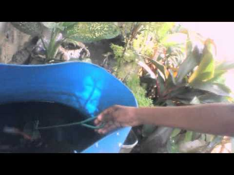 Fish farm at home youtube for Fish farming at home