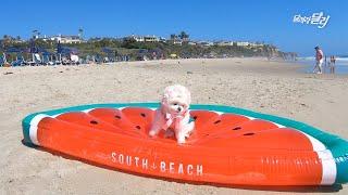 수영장과 해변의 인싸 달리