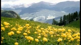 Montagnutis - (Sfumature Friulane)