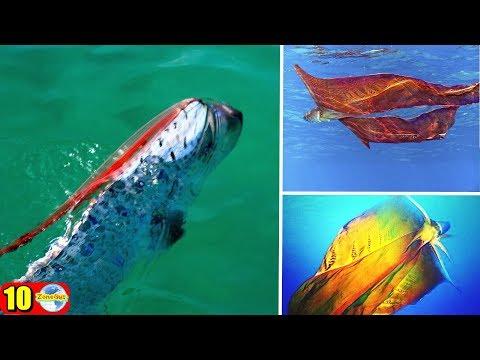 10 สัตว์ใต้ทะเลสุดพิศวงที่คุณต้องไม่เชื่อว่าพวกมันจะมีตัวตนอยู่จริงๆ