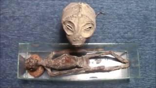 Amphibian or Reptilian? Mummified aliens assembled found in Peru / By krawix 999