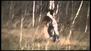 Смешные животные - лошади, подборка 2013 - 2014