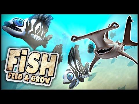 Feed and grow fish new hammerhead shark vs browurag for Feed and grow fish online