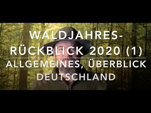 Wald(Schadens)rückblick 2020 (Teil 1) - Allgemeines und Überblick