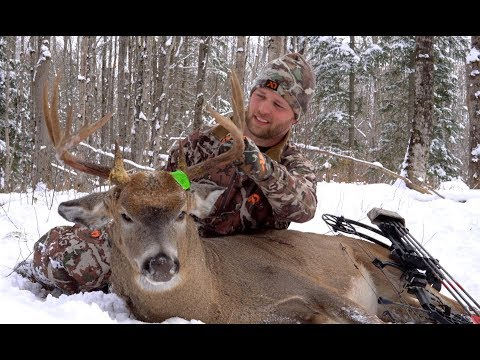 """""""THE PERFECT STORM"""", the story of an Upper Peninsula of Michigan 11 Pointer taken by Josh Stein"""