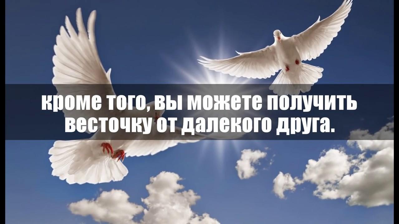 Сонник Голубь к чему снятся голуби во сне