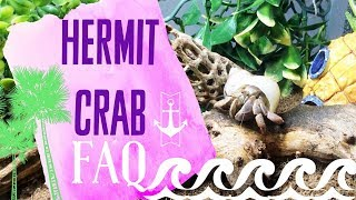 Hermit Crab Care FAQ: Dead Crab? Saltwater? Painted Shells?