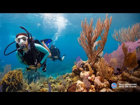 Preview PADI Courses | Learn to Dive
