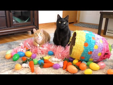 Kitty Easter Playtime!