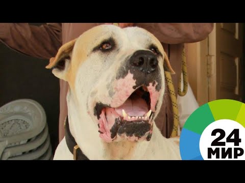 Вопрос: Когда утвердят новый список опасных пород собак?