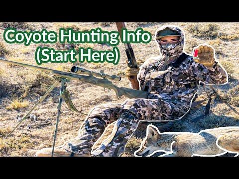 Coyote Hunting Basics - Start Here!