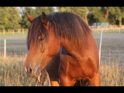 Ein neues Pferd bei uns – Was ist der Plan mit Church Lady?