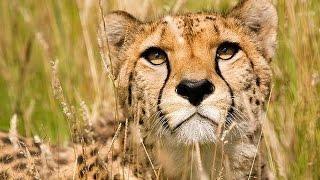 Класс Млекопитающие 3. Урок биологии.