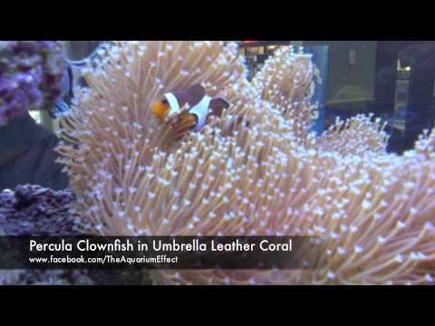 McDonald's Restaurant Custom Reef Aquarium Installation
