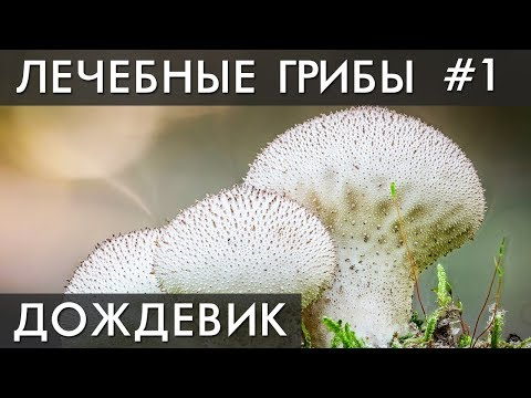 Мицелий грибов: что это такое, виды, готовые формы