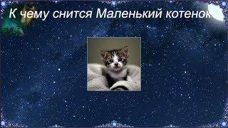 К чему снится Маленький котенок (Сонник)