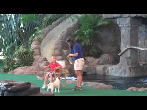 Vullo - Bryce - Animal Trainer - Universa