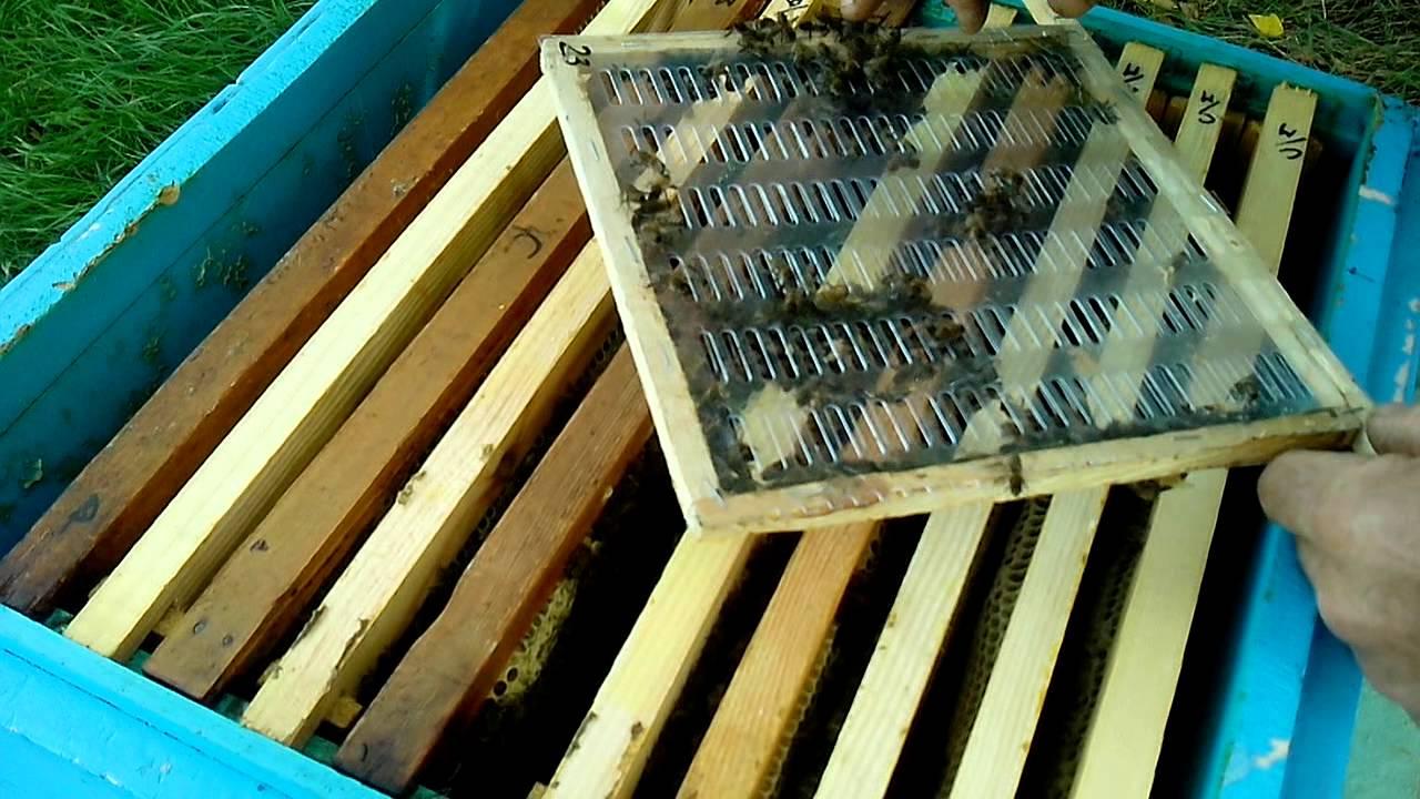 Видео изолятор для пчел