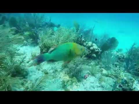 2015 Sombrero Reef Marathon Florida