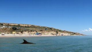 Дельфины загоняют косяк рыбы на мелководье.