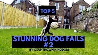 Top 5 Stunning Dog Fails #2