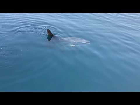 Sunfish visiting Blind Date
