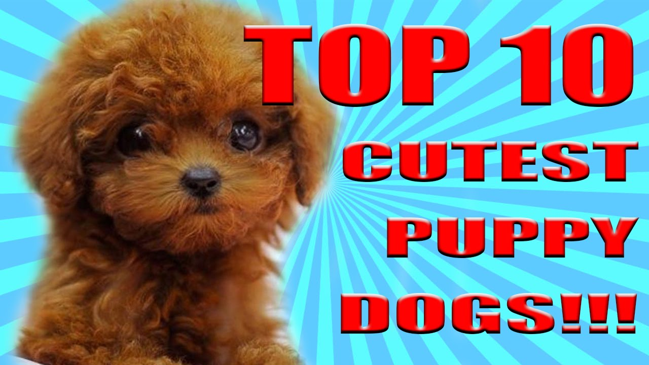 TOP 10 CUTEST DOGS PUPPIES IN THE WORLD!!! 2017!! - YouTube