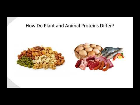 Industry Presented Webinar  A Tale of Two Proteins  Plant vs  Animal for Fitness