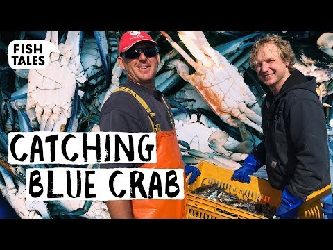 Fishing BLUE CRAB In Western Australia | Bart Van Olphen