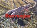 11 Burrunjor - Megalania