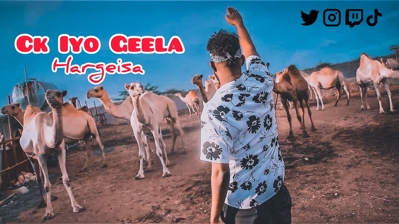 Download Ck oo Geel Caano Kalisay 😂😂😂