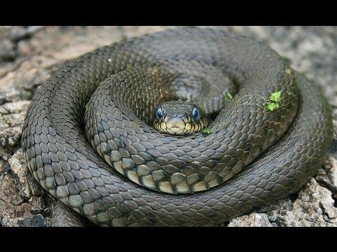 Как живут змеи
