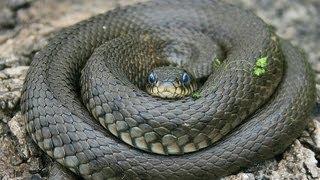 Все о змеях