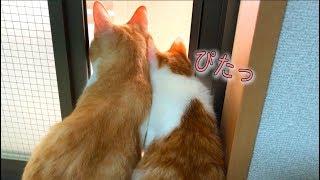 ピタッとくっついて窓の外を眺める猫たちが可愛すぎるんですけど!! thumbnail