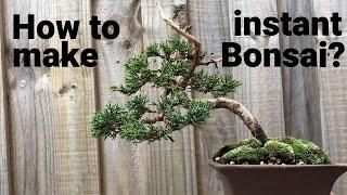 Bonsai ağacı - anlık bonsai oluşturmak için nasıl? Ardıç Bonsai Shimpaku. Bir tencerede anlık bonsai.