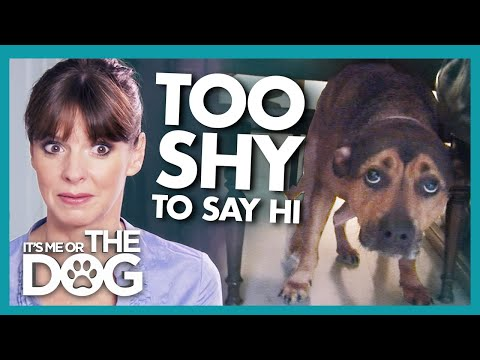 Incredibly Shy Dog Shocks Everyone When Training Gets Instant Results | It's Me or The Dog