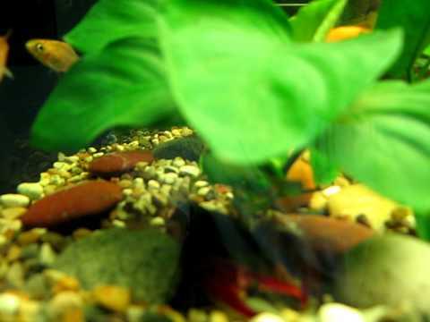 My new aquarium HIMAT FTB-1000
