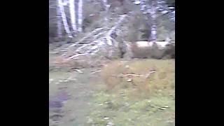 Смерч ураган в селе Советское ночью 29 июля 2017 года. Ураган Ирма отдыхает