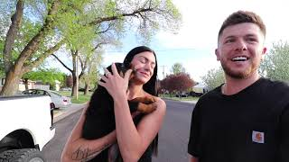 8 Week old Rottweiler puppy first days home